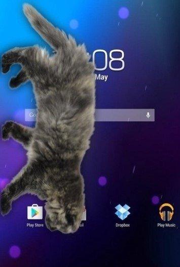 猫咪桌宠图2