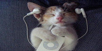 手機聽歌軟件哪個好